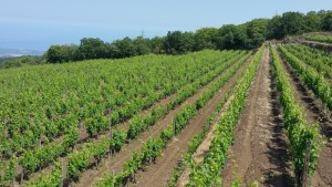 Etna Wine Estate for a Sicily Golf Tour