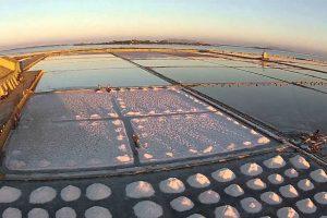 Salt-harvested2300006