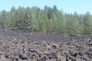 the-natur-of-Mount-Etna
