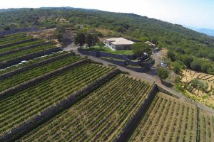 the-vineyards-on-mt-Etna