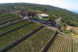 vineyards-on-Mout-Etna-area