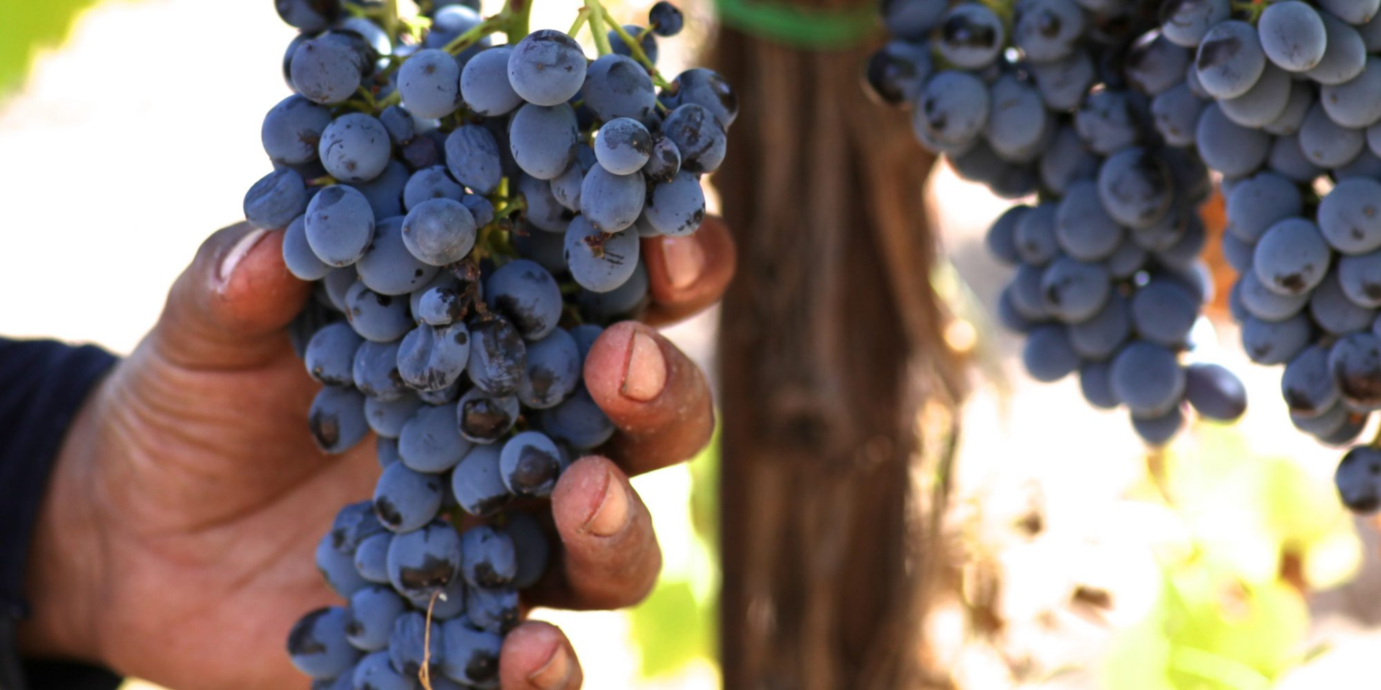 ETNA - Wine
