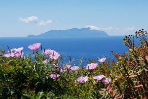 Favignana island